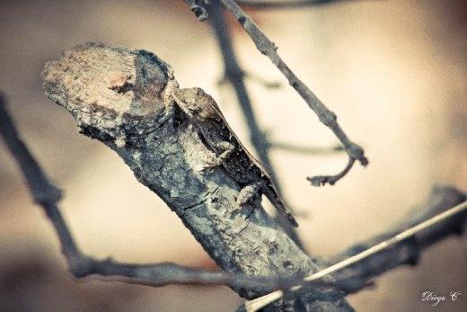 A small lizard in a small stick.