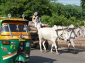 Two common modes of transport.  I always ride in the auto-rickshaw on the left. On the right, it seems the bigger the load, the more primitive the vehicle. : by dilixi, Views[123]