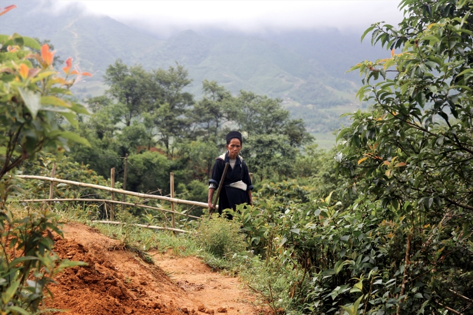 An elderly Black H'mong woman tends to the field in Northern Vietnam. Their traditional clothing is made by hand using techniques  that have not been changed for hundreds of years.