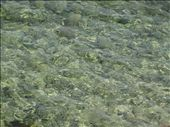The beautiful clear water of the Adriatic...: by dimanamandy, Views[200]