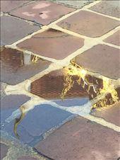 Reflections at Wat Po: by dinagosse, Views[163]
