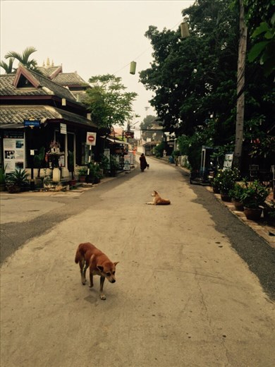 Morning street view, dogs and monks, in Pai. We walked to the station to catch an early trip back to Chiang Mai.