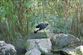 one of thousands of birds. I think I have pictures of all of them.: by djpbrand, Views[135]