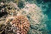 Great B Reef: by djswanson, Views[254]