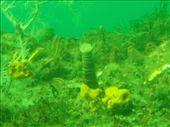 underwater observatory: by djswanson, Views[159]