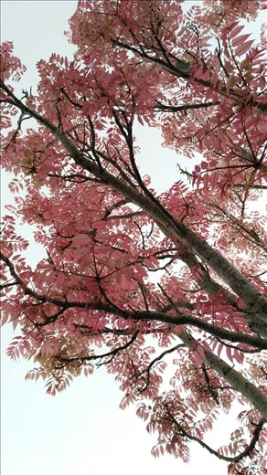 Impressionen... Rosa Blätter!