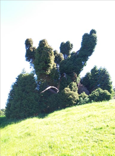 Abgefahrener Baum