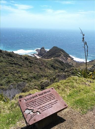 Maori spriit of Cape Reingar.