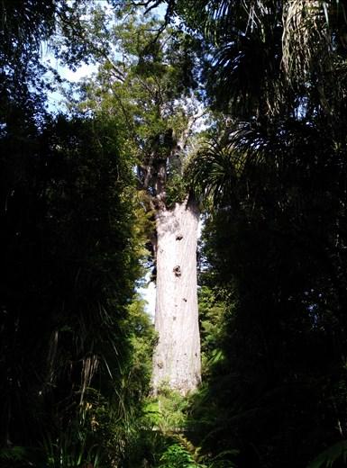 So gigantisch, das in der Baumkrone andere Bäume und Pflanzen wachsen!