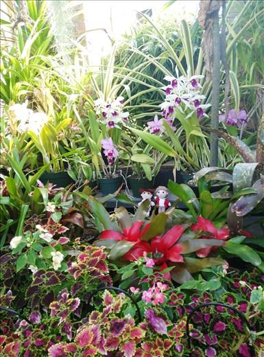 Blumenhaus in Auckland