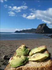 Piha Beach, nördlich von Auckland.: by domi_info, Views[85]