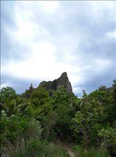 Wir bestiegen den Castle Rock! Einen ganz schön hohen Felsen mit gutem Ausblick!: by domi_info, Views[65]
