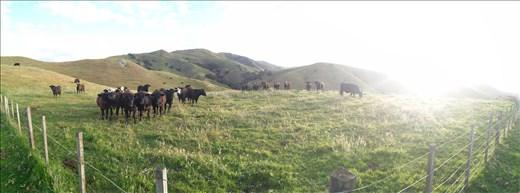 Kühe kannst Du hier überall beobachten... Aufjedenfall beobachten SIE DICH!