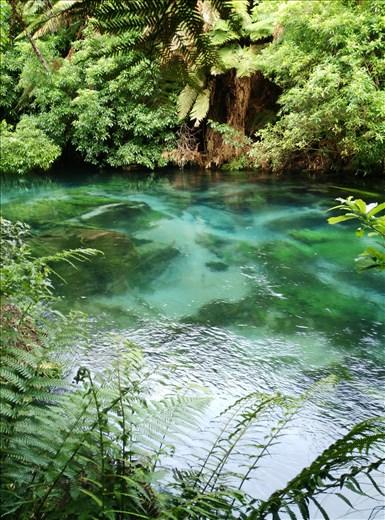 Die Blue Springs in der Nähe von Tokoroa, wir fuhren Richtung Lake Taupo