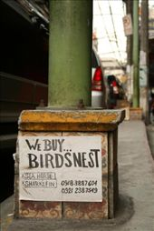 Ad posted on the base of a lamp post which read: we buy birds' nests.: by dondealban, Views[375]