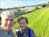 crops near Apulia: by donna_jeff, Views[114]