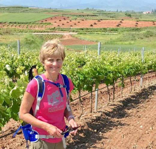 vineyard DMS