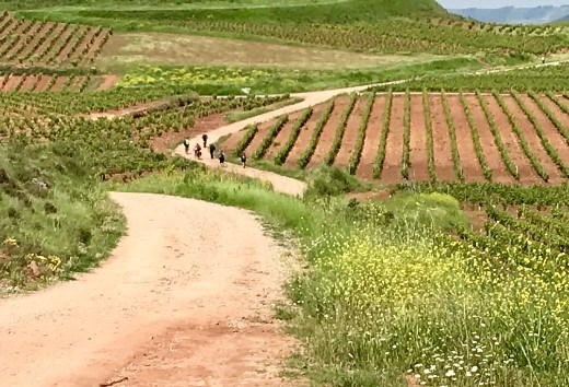 vineyards and pilgrims Aleson