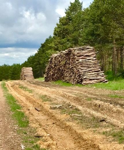 logging Oca hills