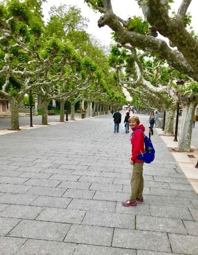 Grape trees Burgos DMS