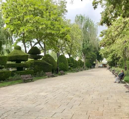 shrubs Burgos