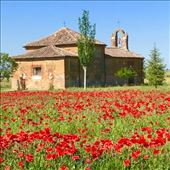 Poppies church Bercianos del Real Camino: by donna_jeff, Views[86]