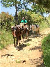 Horses Herrerias to O Cebreiro: by donna_jeff, Views[20]