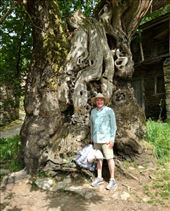 800 year old tree JGH: by donna_jeff, Views[78]