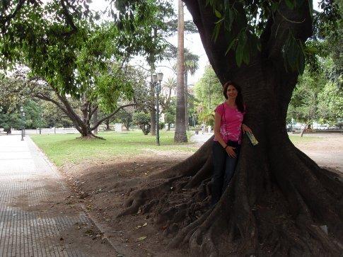 A very big tree