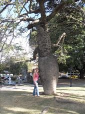 Doreen by a funny looking tree.  Look how fat the trunk is.  Its called Palo Gordo.: by doreen-b, Views[244]