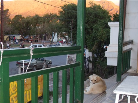 Porch of hotel with the owner´s dog enjoying the view