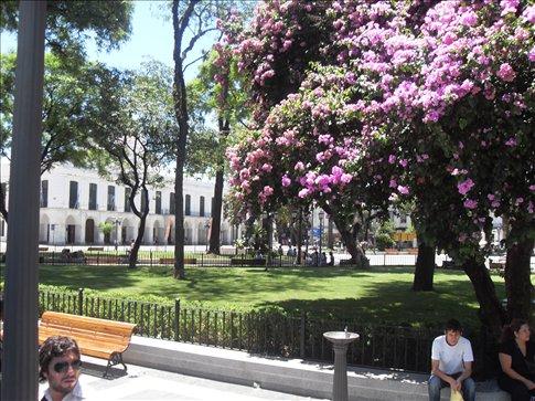 Plaza San Martin in full bloom!