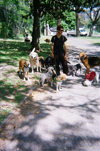 Professional Dog Walker in park in Buenos Aires