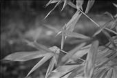 Lost Farm in central Australia, bamboo leaves, wind, quiet, silence .... love .: by dreamscometrue, Views[368]