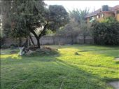 Backyard : by drfrenchie, Views[116]