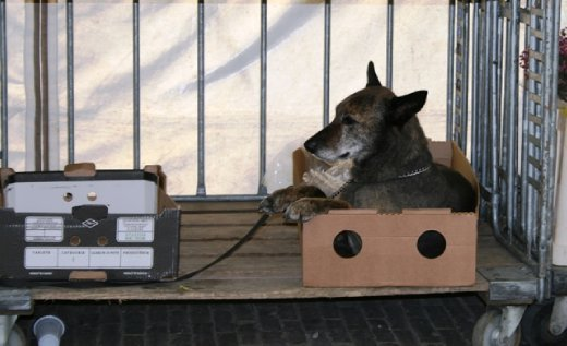 While other dogs are forced to work for their living