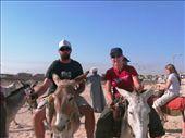 I want to keep my donkey!: by drmitch, Views[913]