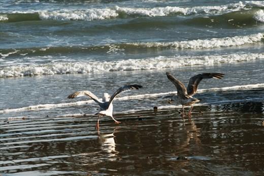 Angry angry seagull wars