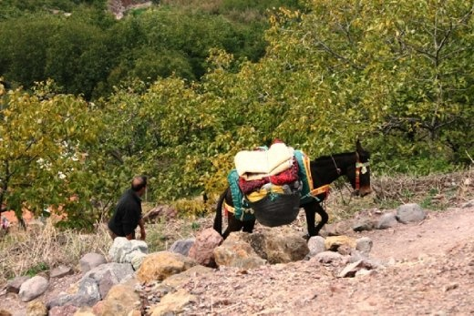 Mule carrying our lunch...mmmm