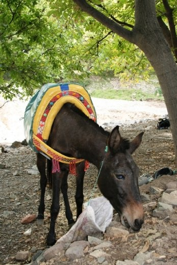 Time for e rest for our hard-working mule