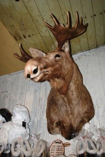 Disturbing fur shop and all its trophies