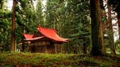 This small Shinto shrine, nestled within a forest grove of Japanese cedar near Tazawako in the Akita prefecture is a prime example of the spiritual link modern Japanese people have between their daily lives and surrounding nature.  Unassuming shrines like this are to be found within every small community of people and are built to worship various spirits  or 'kami' that live in natural features in, or nearby the shrine, often a large rock, or tree.: by duncast, Views[2527]