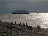 Mas pinguinos: by eburguera, Views[1067]