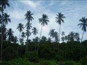 Perhentian Islands: by eddie86, Views[151]