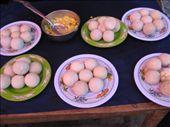 Dude, turtle eggs!: by eden, Views[211]