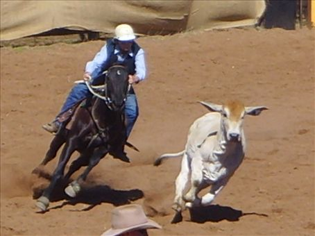 Some of the real action from the challenge.  I think this cow has got it's ears ready for takeoff !!