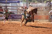A bull rider in trouble: by edinoz, Views[131]