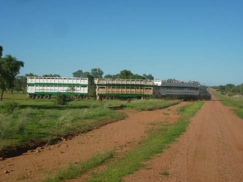 Cattle heading to Townsville