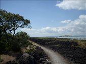 the track on motutapu island: by elawlor, Views[277]