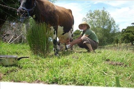 me milking Lulu, the housecow